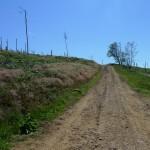Deforestation near highcliff nab